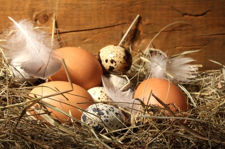 chicken and quail eggs in a nest on wooden background Stock Photo - 12721570