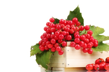 red berries of viburnum in wooden box and briar isolated on white photo