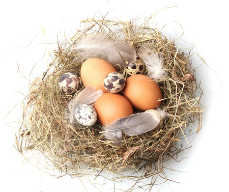 chicken nest: chicken and quail eggs in a nest isolated on white Stock Photo
