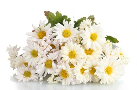 beautiful bouquet of daisies isolated on white photo
