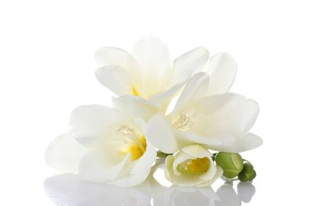 Beautiful freesia isolated on white photo