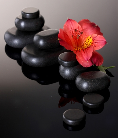 red pebble: Spa stones and red flower on grey background