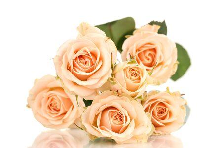Beautiful roses isolated on white Stock Photo - 13223442
