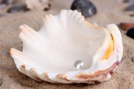 Sea shell with pearl on sand close-up photo