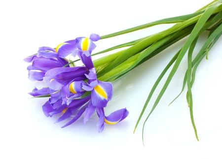detail of bunch: Beautiful bright irises isolated on white Stock Photo