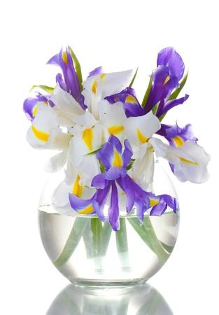 iris flower: Beautiful bright irises in vase isolated on white