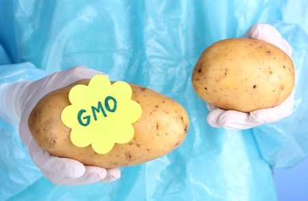 genetically: A scientist holds a genetically modified vegetable Stock Photo