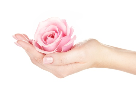 cosmetic lacquer: Pink rose with hands on white background Stock Photo