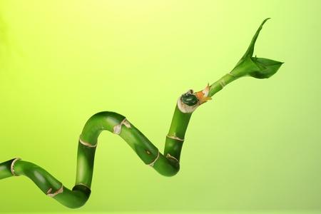 beautiful bamboo on green background isolated on white photo