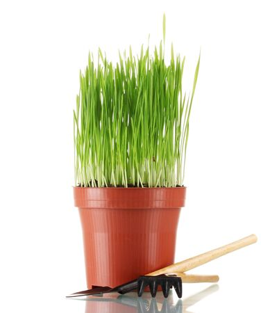 Green grass in a flowerpot isolated on white photo