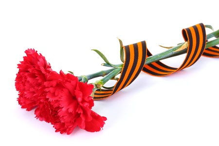 carnations and St. George's ribbon isolated on white Stock Photo - 13374696