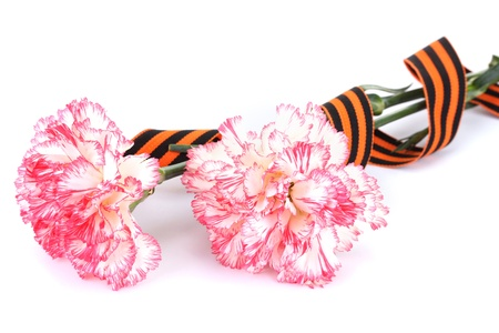 carnations and St. George's ribbon isolated on white Stock Photo - 13374264