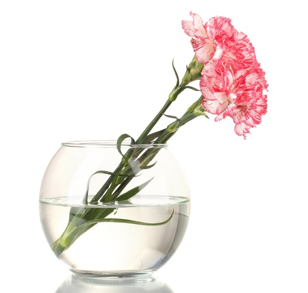 Beautiful carnations transparent vase isolated on white photo