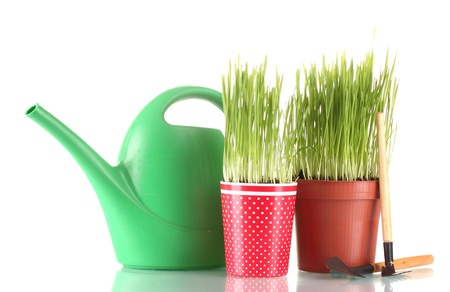 Green grass in two flowerpot isolated on white photo