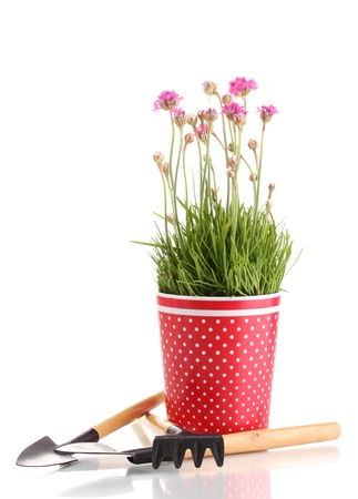 Pink flowers in pot with instruments isolated on white photo