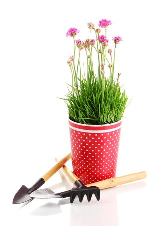 Pink flowers in pot with instruments isolated on white Stock Photo - 13435234