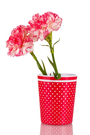 Beautiful carnations in red cup isolated on white photo