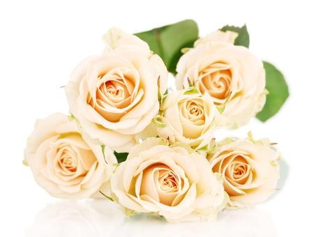 Beautiful roses isolated on white Stock Photo - 13518268
