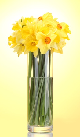 flower arrangements: beautiful yellow daffodils in transparent vase on yellow background Stock Photo