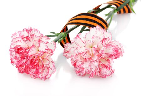carnations and St. George's ribbon isolated on white Stock Photo - 13517560