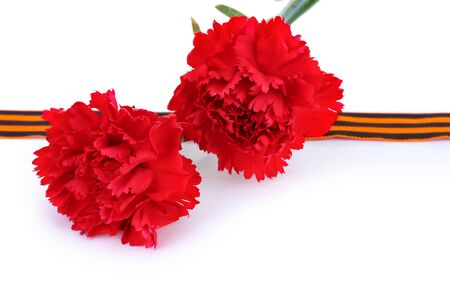 carnations and St. George's ribbon isolated on white Stock Photo - 13518369