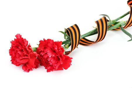 carnations and St. George's ribbon isolated on white Stock Photo - 13518283