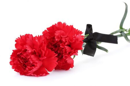carnations and black ribbon isolated on white photo