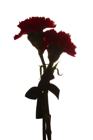 two mourning carnations isolated on white photo