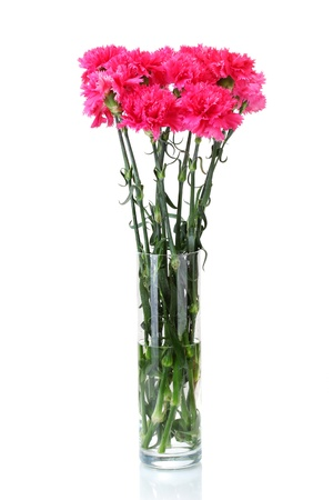 Beautiful pink carnations in glass vase isolated on white photo