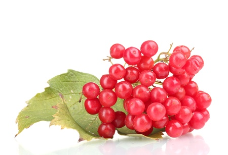 red berries of viburnum with leaf isolated on white photo