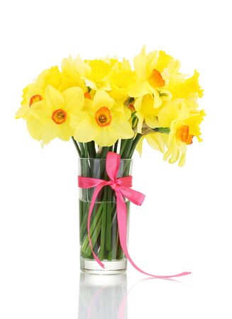 beautiful yellow daffodils in transparent vase with bow isolated on white photo