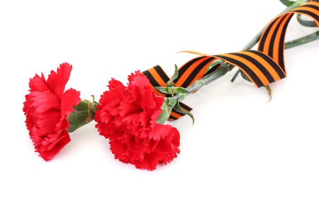 carnations and St. George's ribbon isolated on white Stock Photo - 13581467