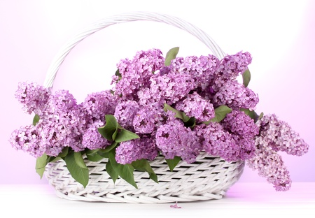 beautiful lilac flowers in basket on purple background Stock Photo - 13666772