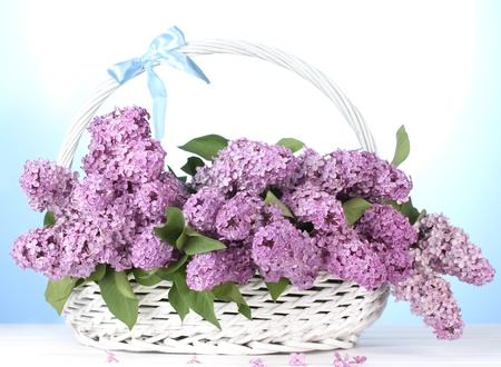 beautiful lilac flowers in basket on blue background Stock Photo - 13666045