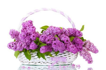 beautiful lilac flowers in basket isolated on white Stock Photo - 13666737