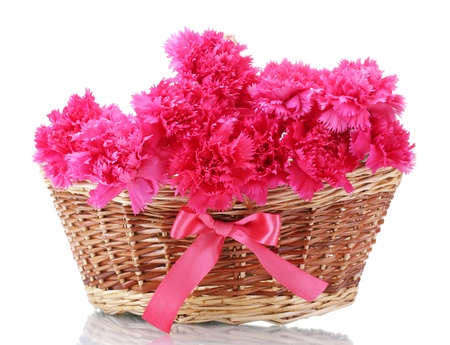 Beautiful pink carnations in basket isolated on white photo