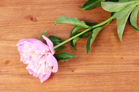 Pink peony on wooden background photo