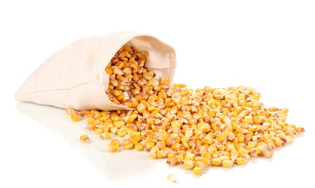 Cloth bag of corn isolated on white photo