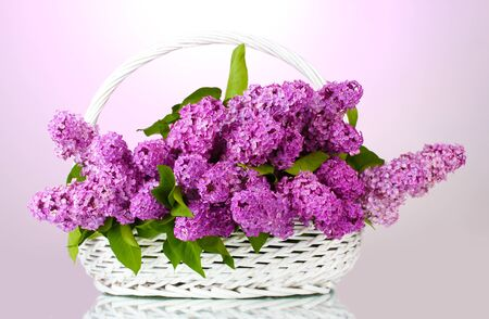 beautiful lilac flowers in basket on purple background Stock Photo - 13680936