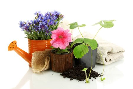 watering can and plants in flowerpot isolated on white photo
