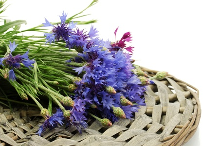 cornflowers isolated on white photo