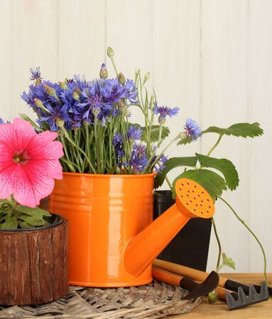 watering can, tools and flowers on wooden background photo