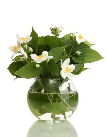 jessamine: bellissimi fiori di gelsomino in un vaso isolato su bianco