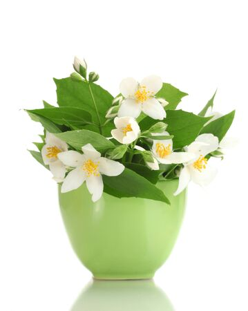 beautiful jasmine flowers in green vase isolated on white photo
