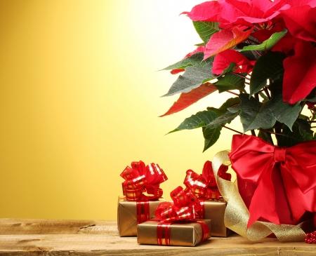 flor de pascua: poinsettia hermoso en maceta, los regalos y la cinta sobre la mesa de madera sobre fondo amarillo Foto de archivo