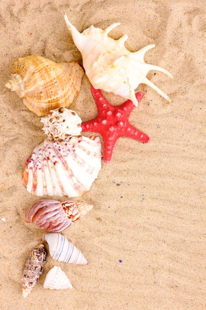 Seashells and starfish on sand photo