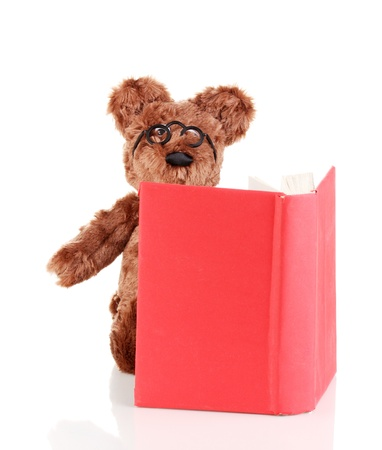 Bear toy reading book isolated on white photo