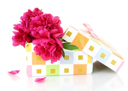 valentinas: beautirul pink peonies in gift box isolated on white