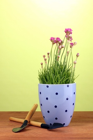Pink flowers in pot with instruments on wooden table on green background photo