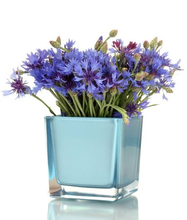 cornflowers in vase isolated on white photo